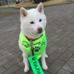 HIWATARI FIMI さんのプロフィール写真
